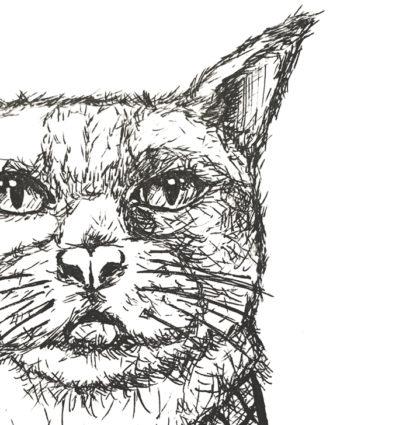 LEO THE CAT